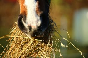 horse-1074867_1920
