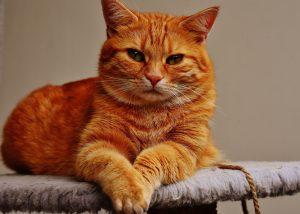 cat-1675437_1920