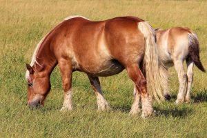 horse-1270698_1920
