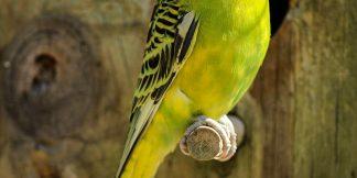 Fugle, høns og duer