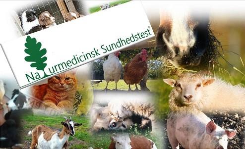 Naturmedicinsk Sundhedstest til dyr